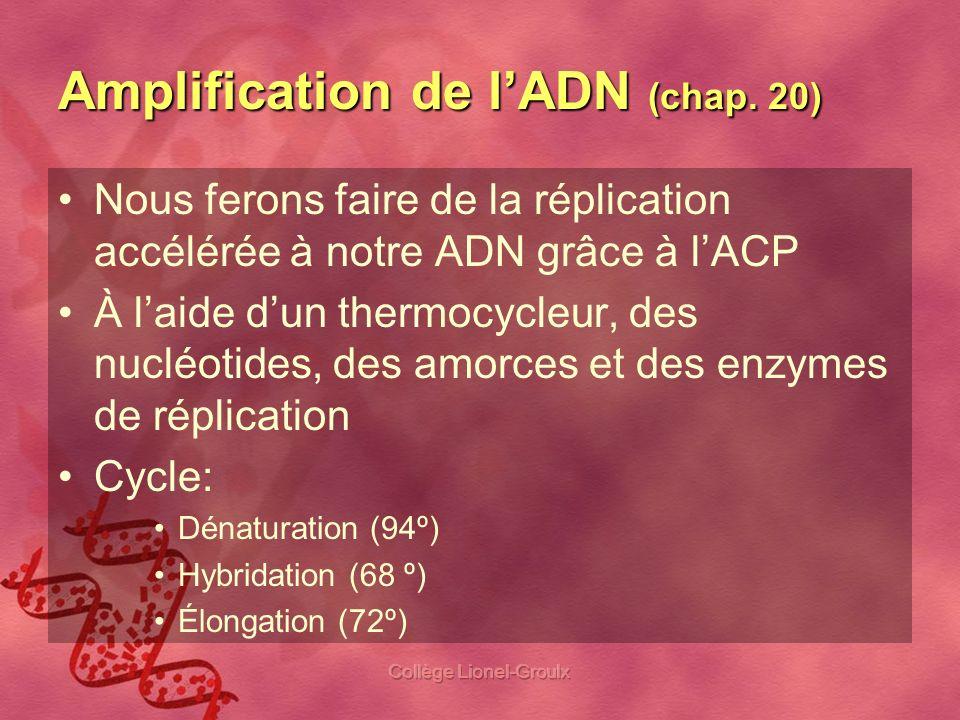 Amplification de l'ADN (chap. 20)