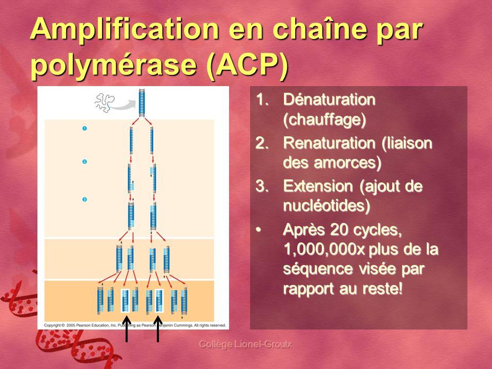 Amplification en chaîne par polymérase (ACP)