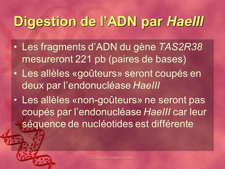 Digestion de l'ADN par HaeIII