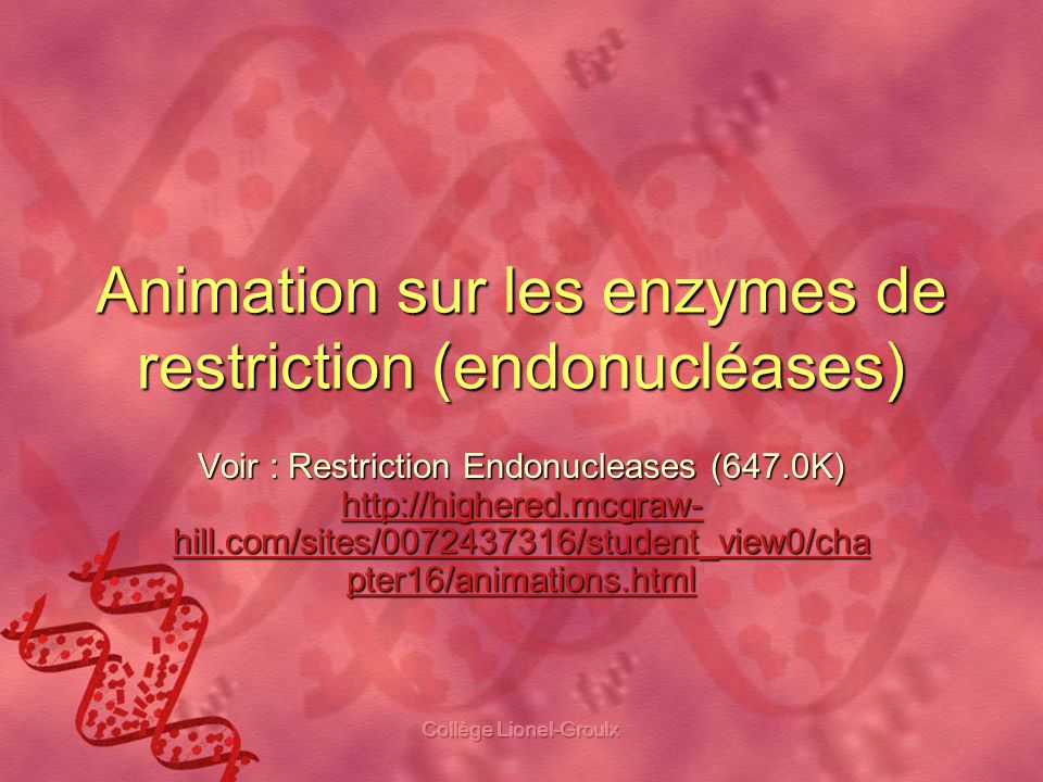 Animation sur les enzymes de restriction (endonucléases)
