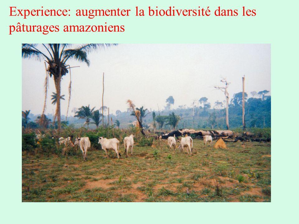 Experience: augmenter la biodiversité dans les pâturages amazoniens