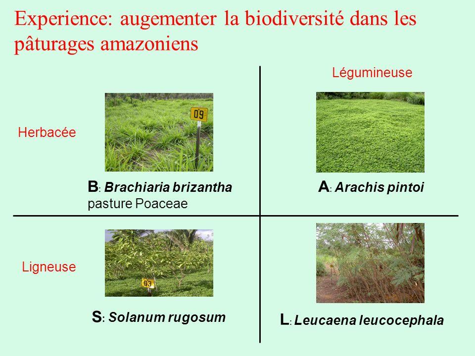 Experience: augementer la biodiversité dans les pâturages amazoniens