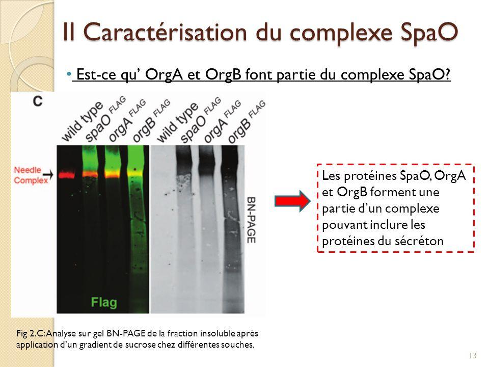 II Caractérisation du complexe SpaO