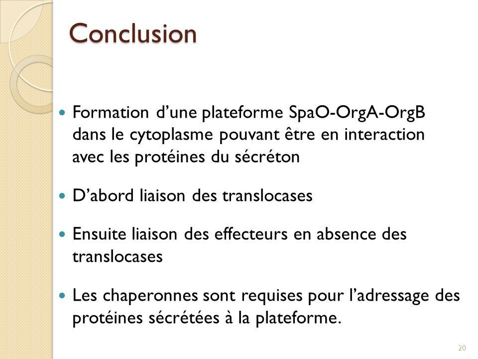 Conclusion Formation d'une plateforme SpaO-OrgA-OrgB dans le cytoplasme pouvant être en interaction avec les protéines du sécréton.