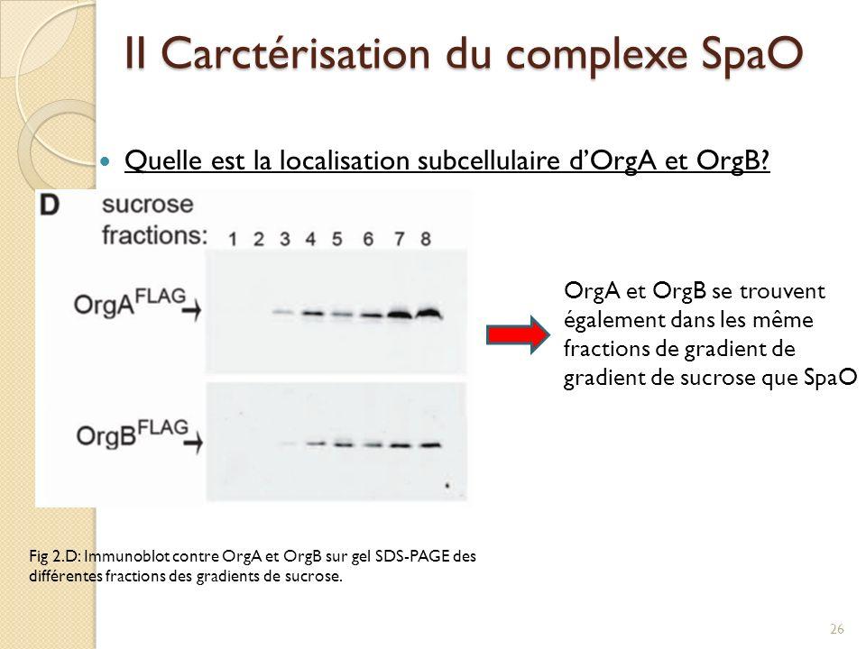 II Carctérisation du complexe SpaO