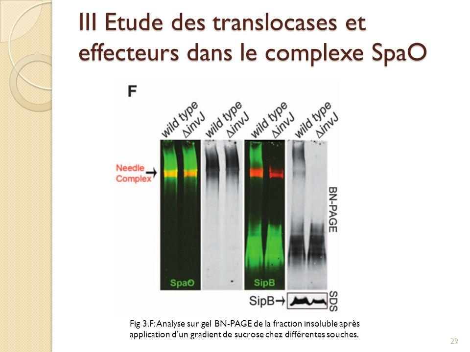 III Etude des translocases et effecteurs dans le complexe SpaO