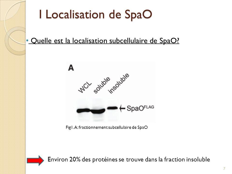 I Localisation de SpaO Quelle est la localisation subcellulaire de SpaO SpaO se trouve à la fois dans la fraction soluble et insoluble!