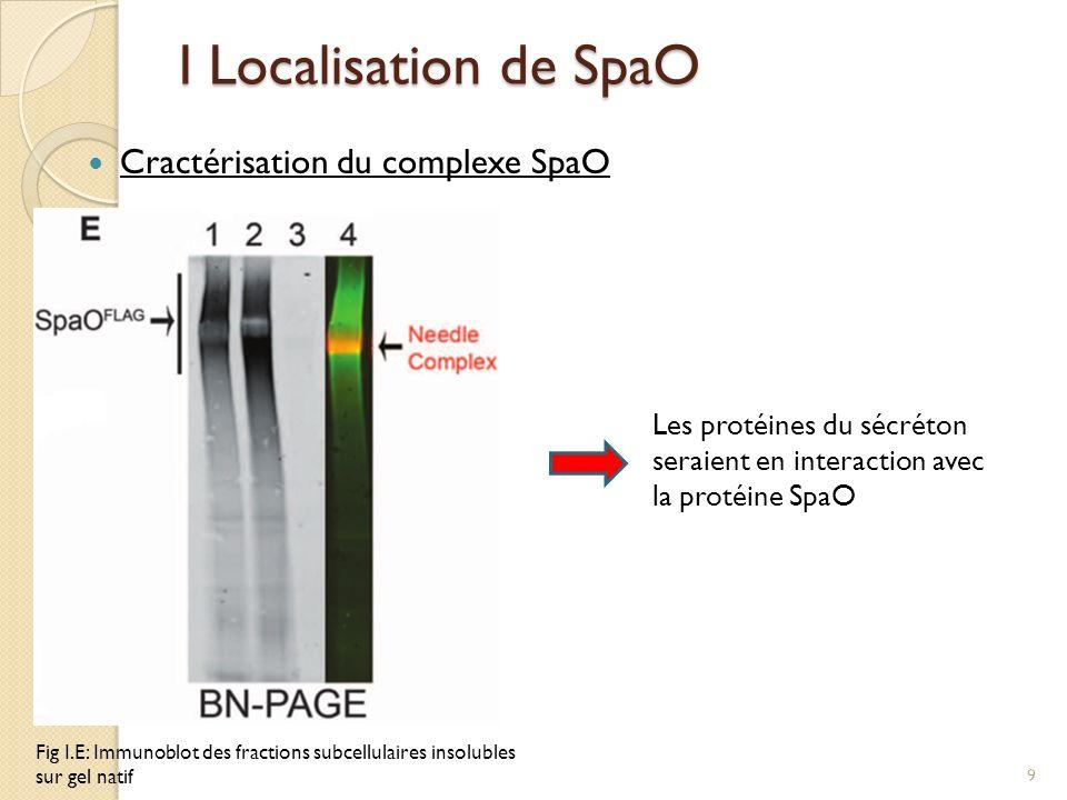 I Localisation de SpaO Cractérisation du complexe SpaO