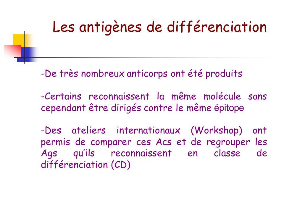 Les antigènes de différenciation
