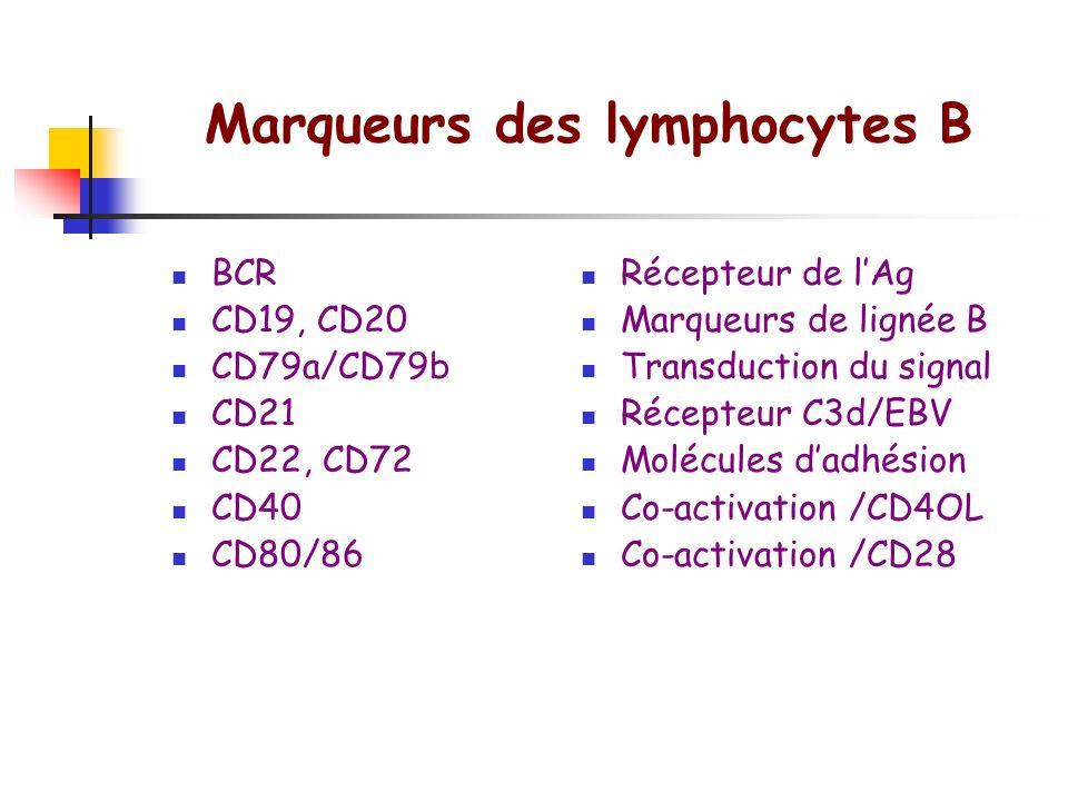 Marqueurs des lymphocytes B
