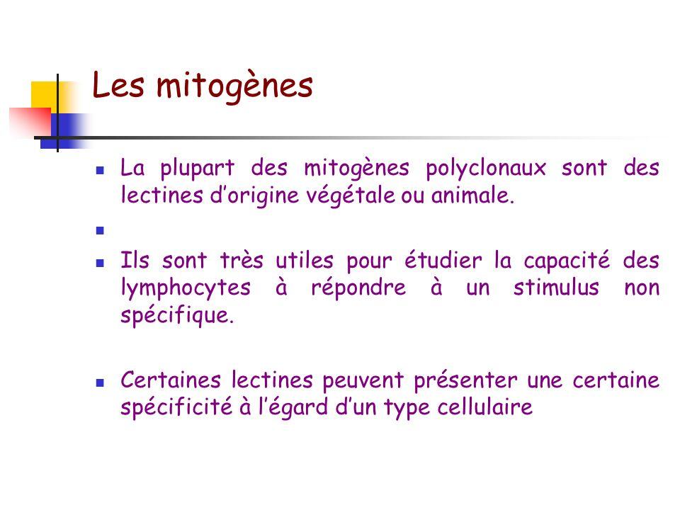 Les mitogènes La plupart des mitogènes polyclonaux sont des lectines d'origine végétale ou animale.
