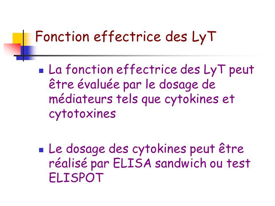 Fonction effectrice des LyT