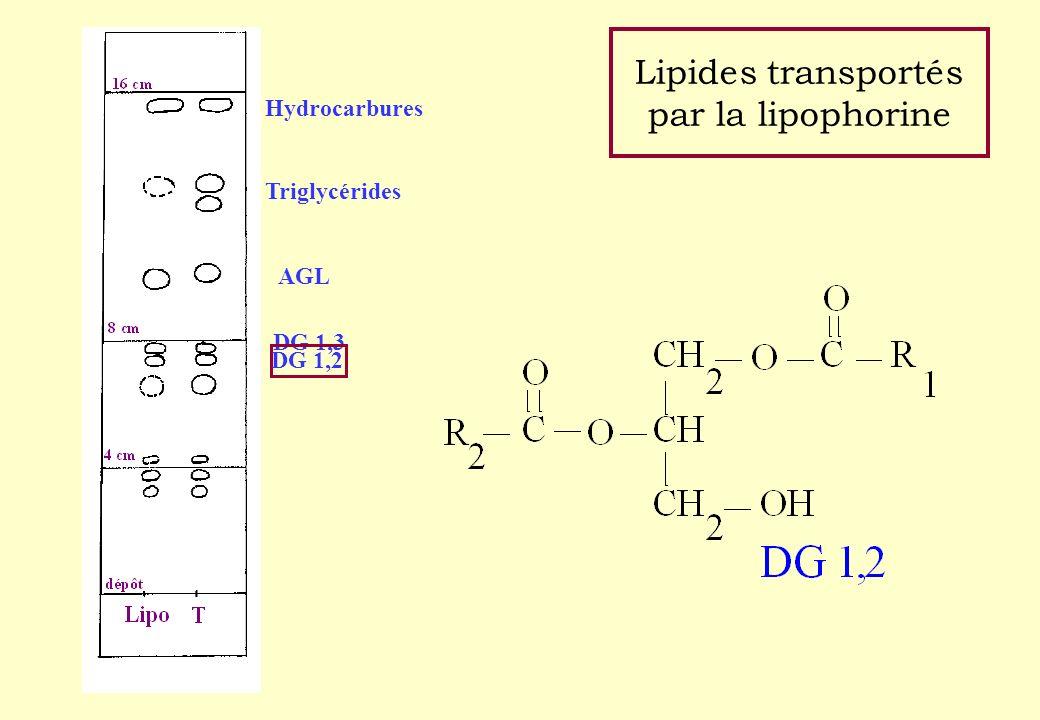 Lipides transportés par la lipophorine
