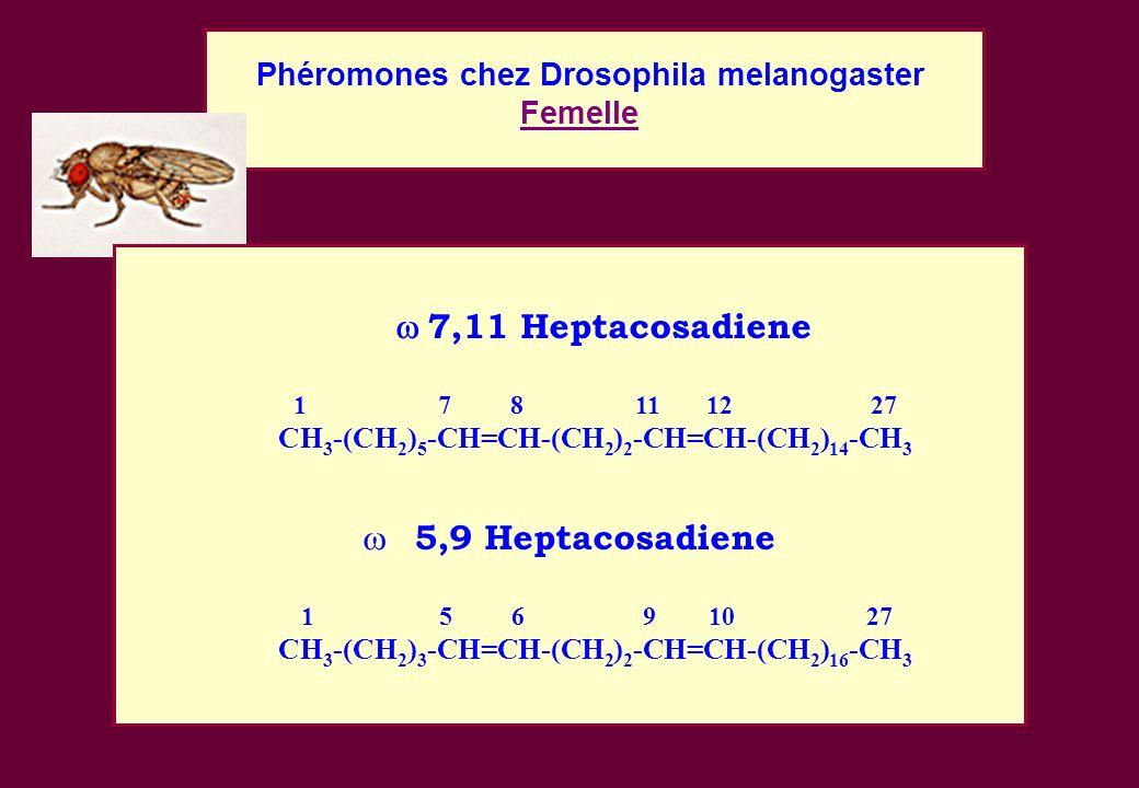 5,9 Heptacosadiene Phéromones chez Drosophila melanogaster Femelle