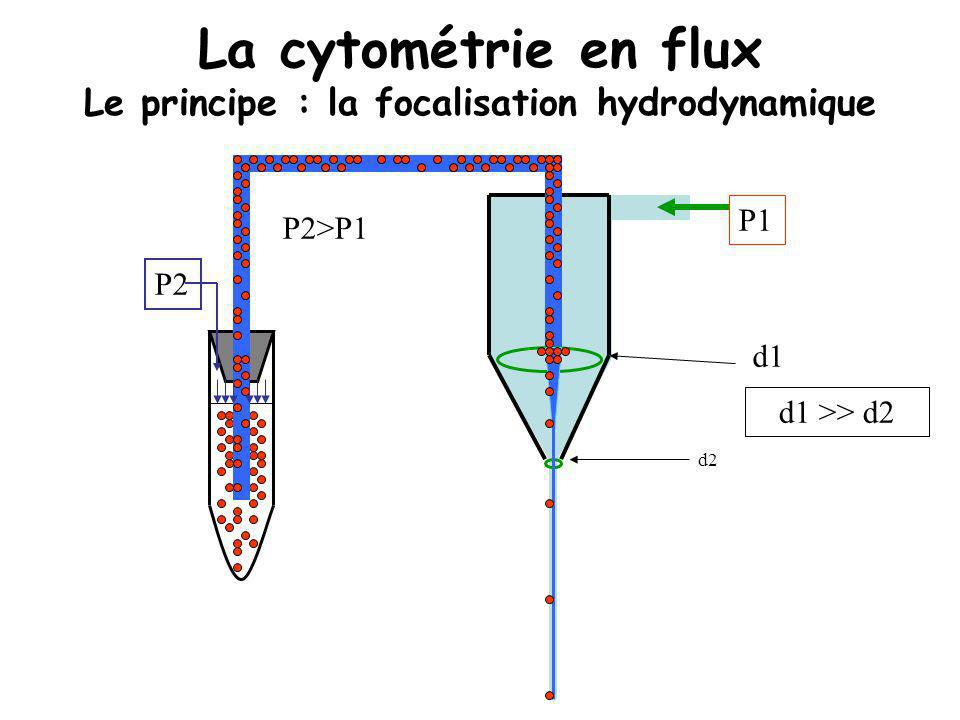La cytométrie en flux Le principe : la focalisation hydrodynamique