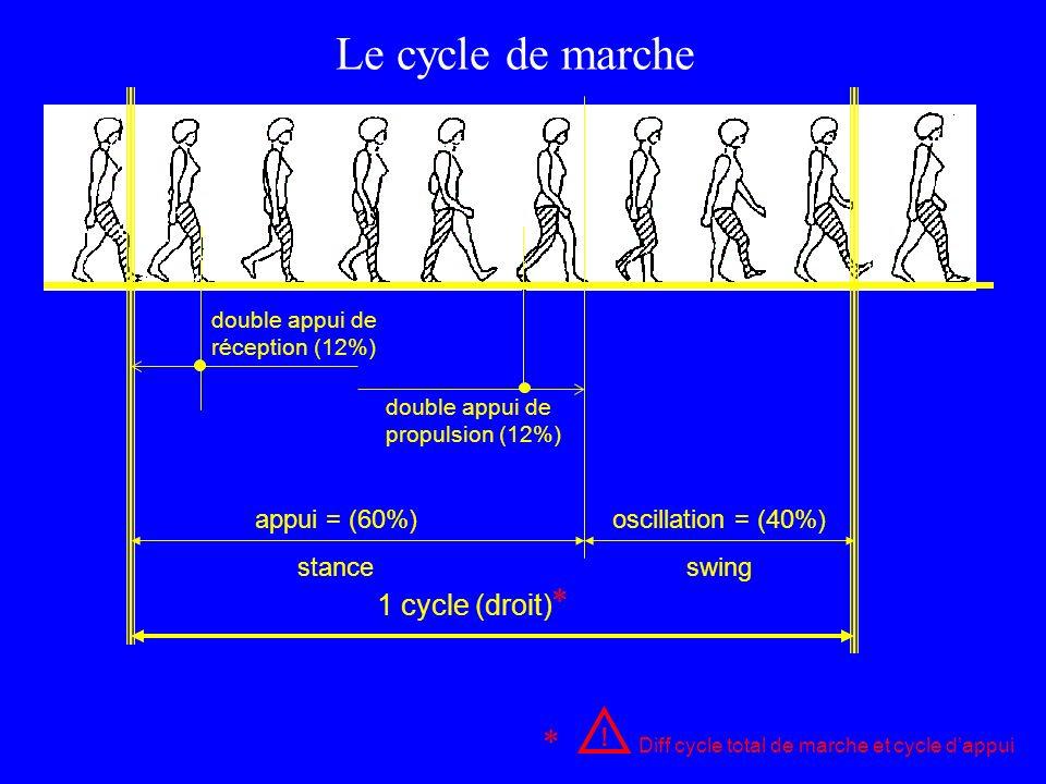 Le cycle de marche * * 1 cycle (droit) appui = (60%) stance