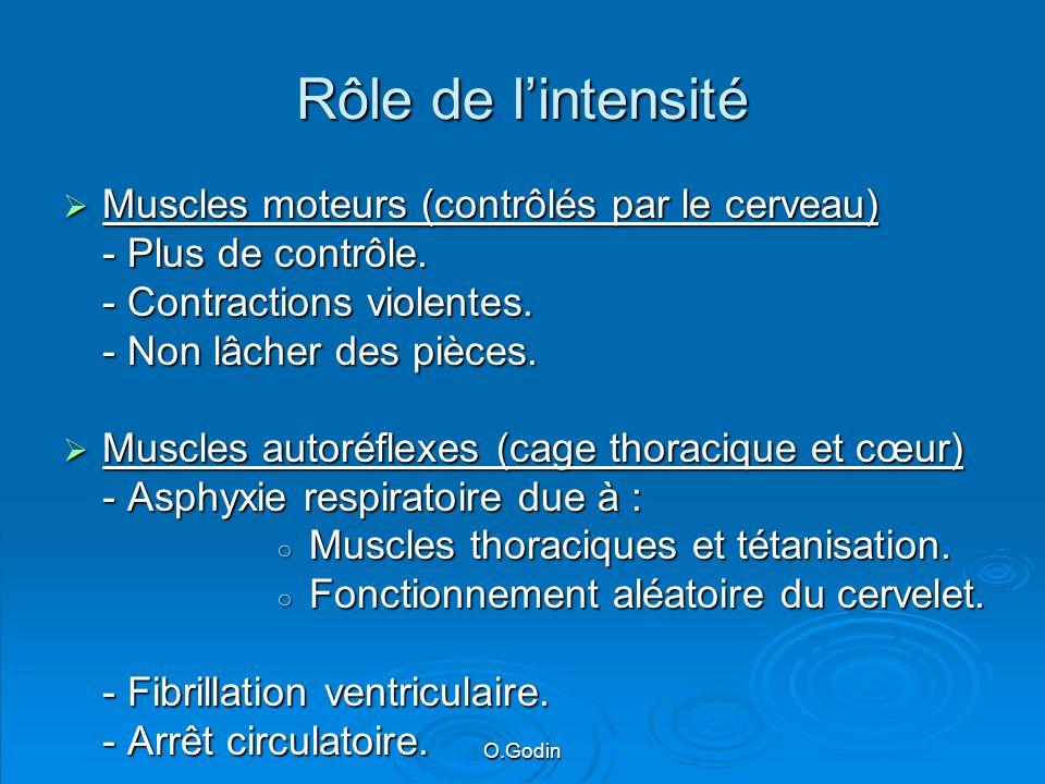 Rôle de l'intensité Muscles moteurs (contrôlés par le cerveau)