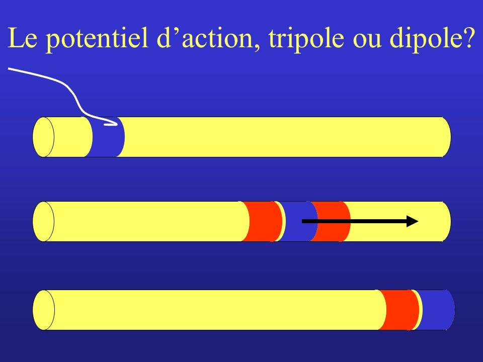 Le potentiel d'action, tripole ou dipole