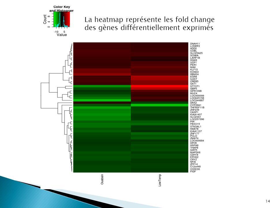 La heatmap représente les fold change