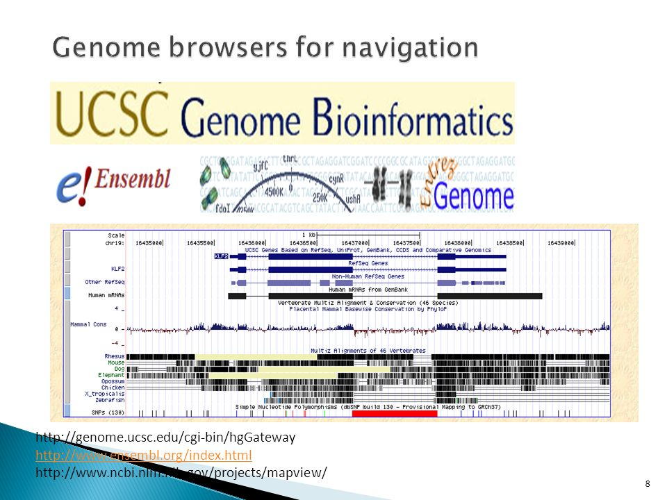 Genome browsers for navigation