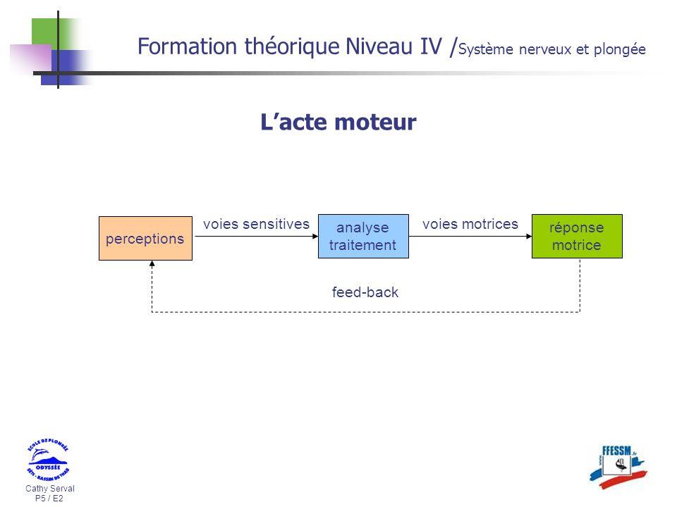 Formation théorique Niveau IV /Système nerveux et plongée