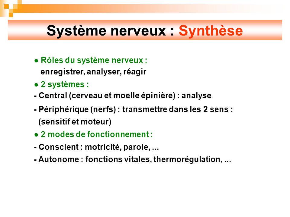 Système nerveux : Synthèse