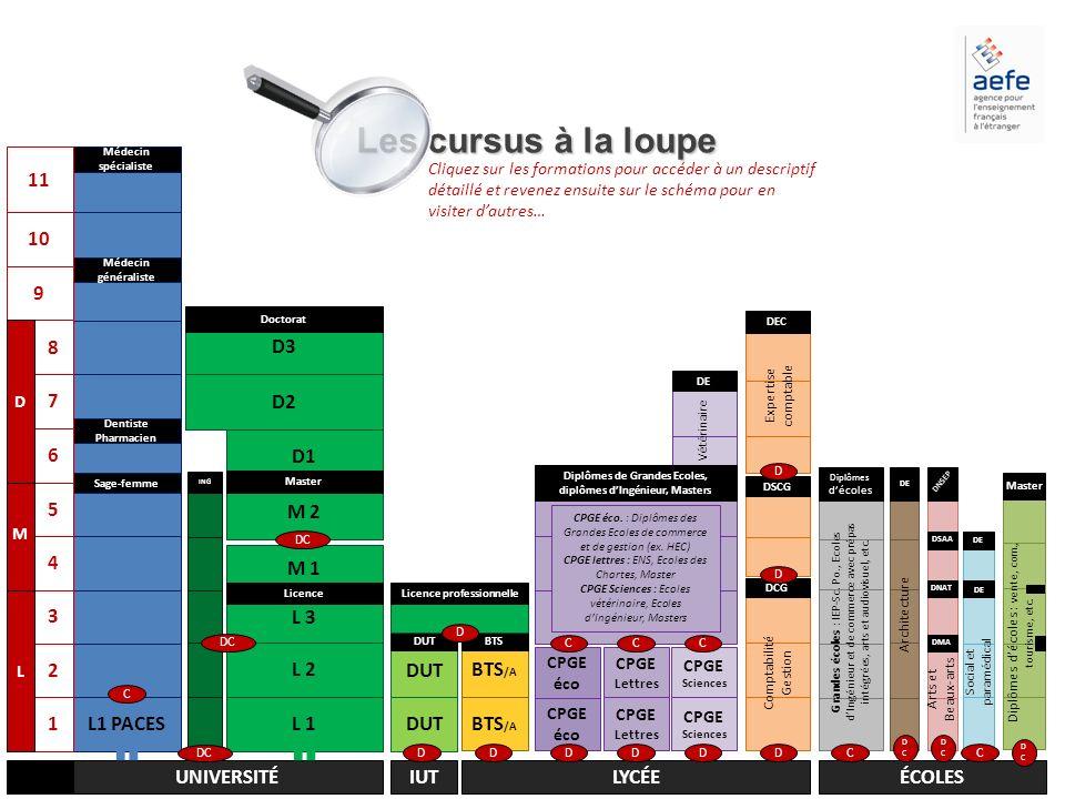 Les cursus à la loupe 11 L1 PACES 10 9 L 1 L 2 L 3 M 2 M 1 D1 D2 D3 1