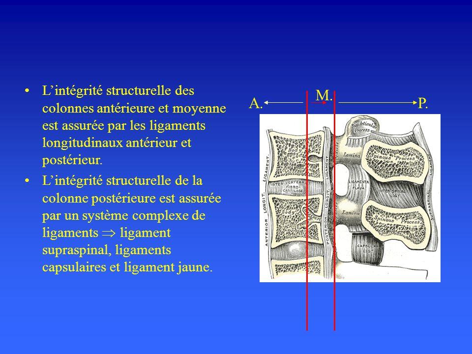 L'intégrité structurelle des colonnes antérieure et moyenne est assurée par les ligaments longitudinaux antérieur et postérieur.