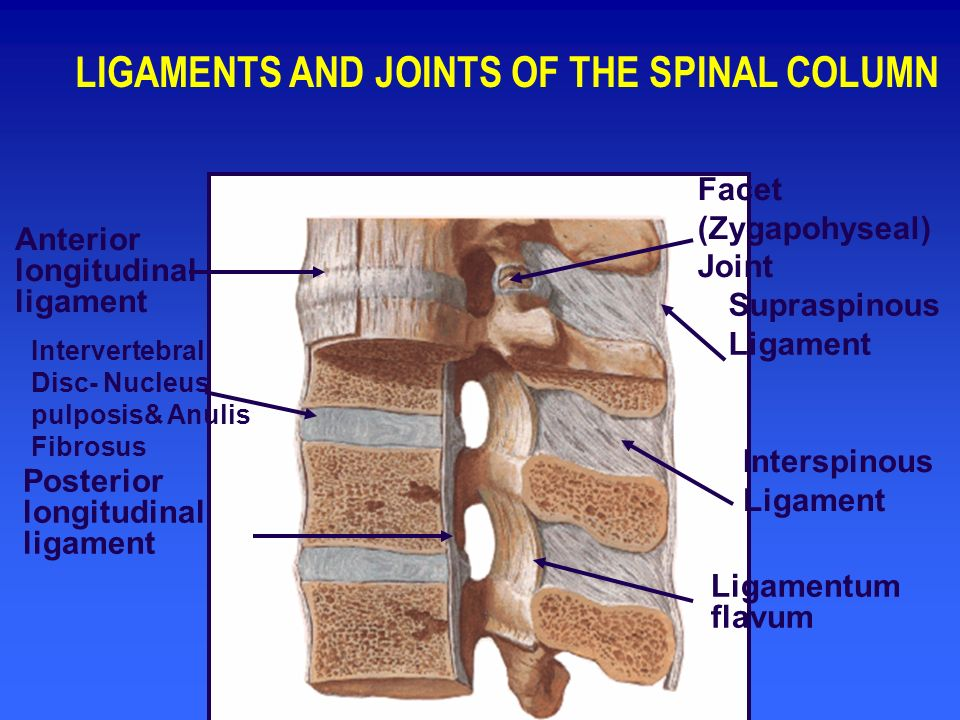LIGAMENTS AND JOINTS OF THE SPINAL COLUMN