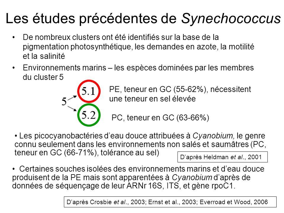 Les études précédentes de Synechococcus