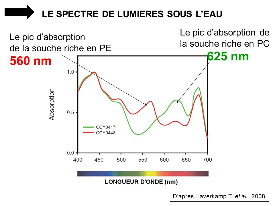 560 nm LE SPECTRE DE LUMIERES SOUS L'EAU Le pic d'absorption de