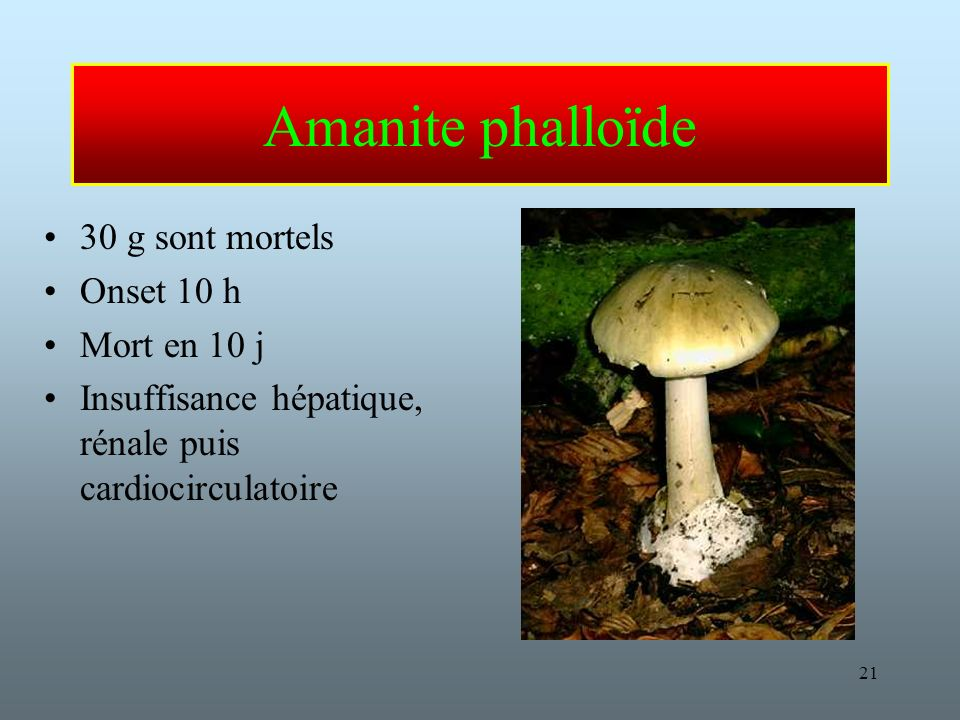 Amanite phalloïde 30 g sont mortels Onset 10 h Mort en 10 j