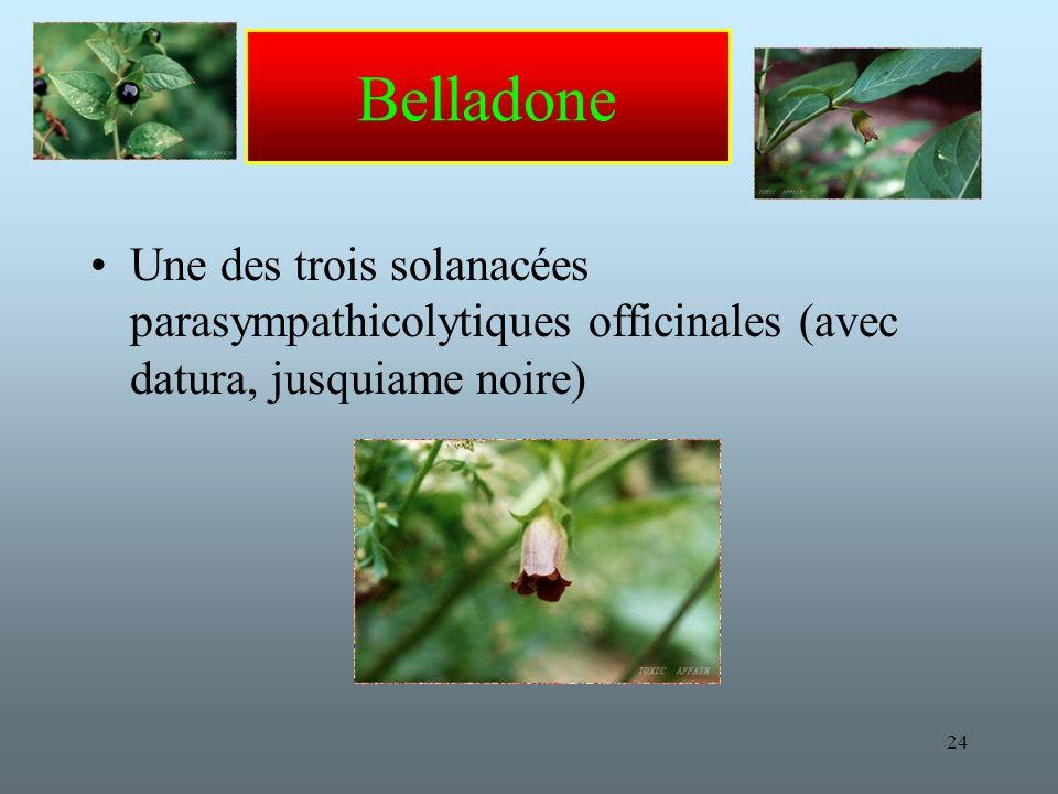 Belladone Une des trois solanacées parasympathicolytiques officinales (avec datura, jusquiame noire)