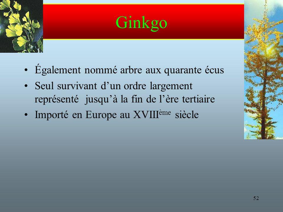 Ginkgo Également nommé arbre aux quarante écus