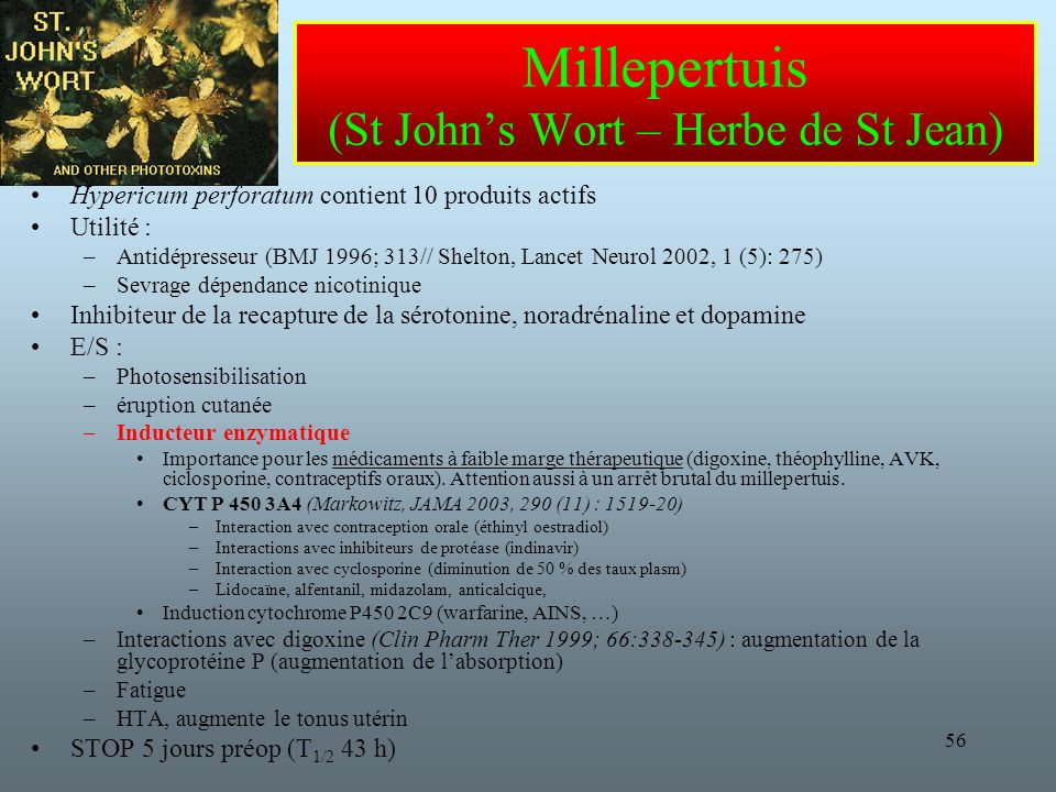 Millepertuis (St John's Wort – Herbe de St Jean)
