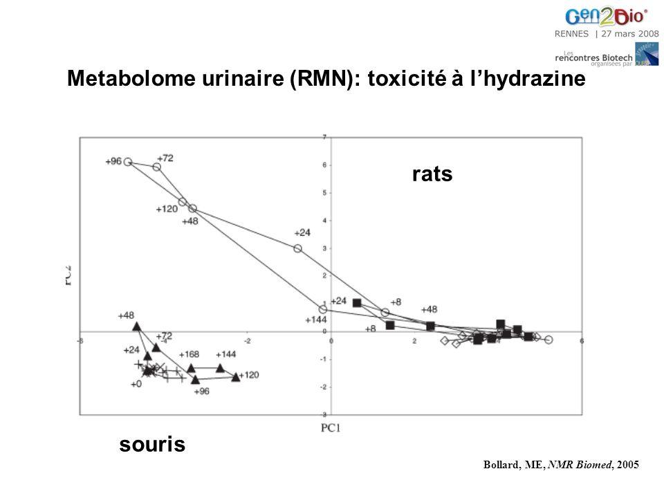 Metabolome urinaire (RMN): toxicité à l'hydrazine