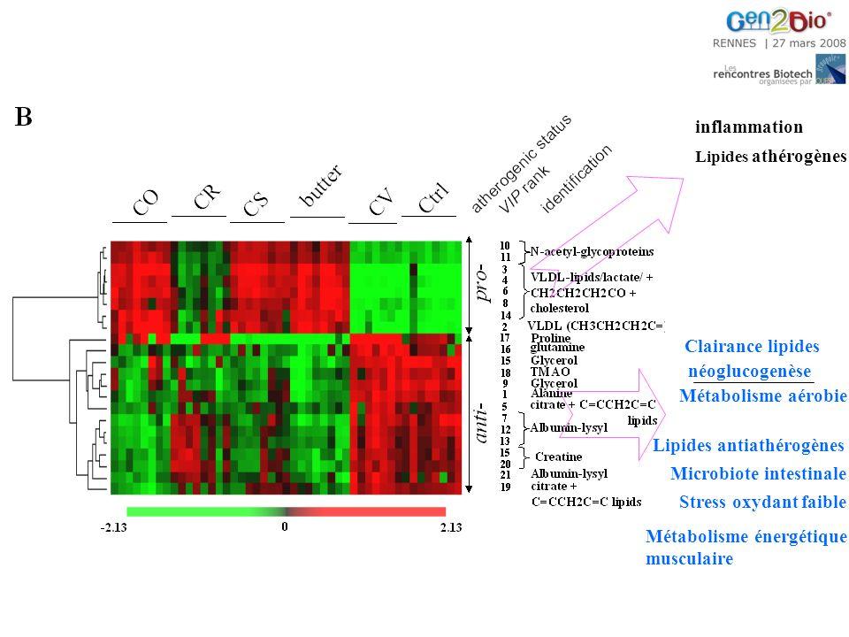 Lipides antiathérogènes Métabolisme aérobie