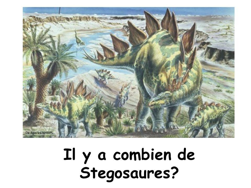 Il y a combien de Stegosaures