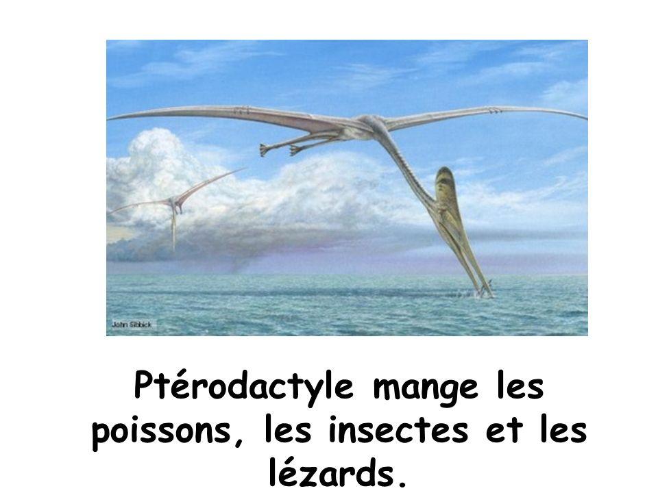 Ptérodactyle mange les poissons, les insectes et les lézards.