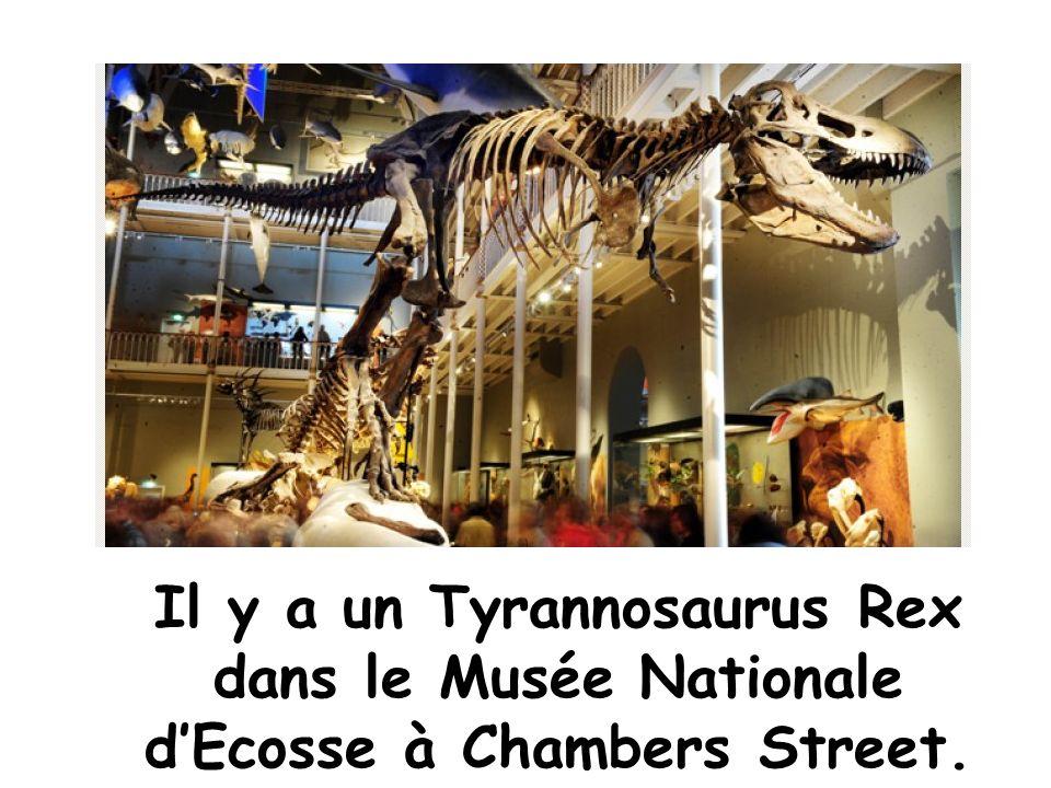 Il y a un Tyrannosaurus Rex dans le Musée Nationale d'Ecosse à Chambers Street.