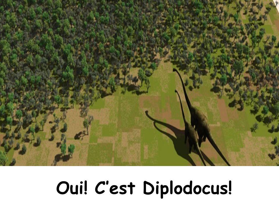 Oui! C'est Diplodocus!