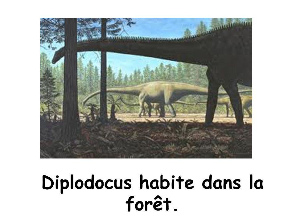 Diplodocus habite dans la forêt.