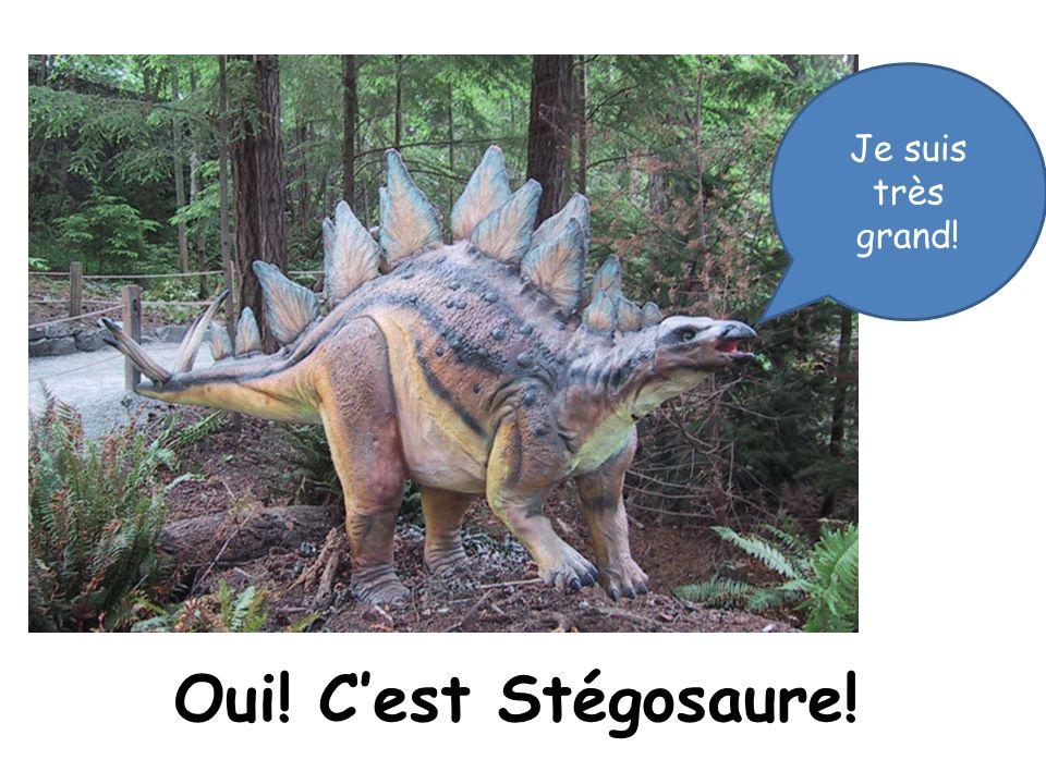 Je suis très grand! Oui! C'est Stégosaure!