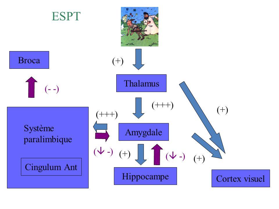 ESPT Broca (+) Thalamus (- -) (+++) (+) (+++) Système paralimbique