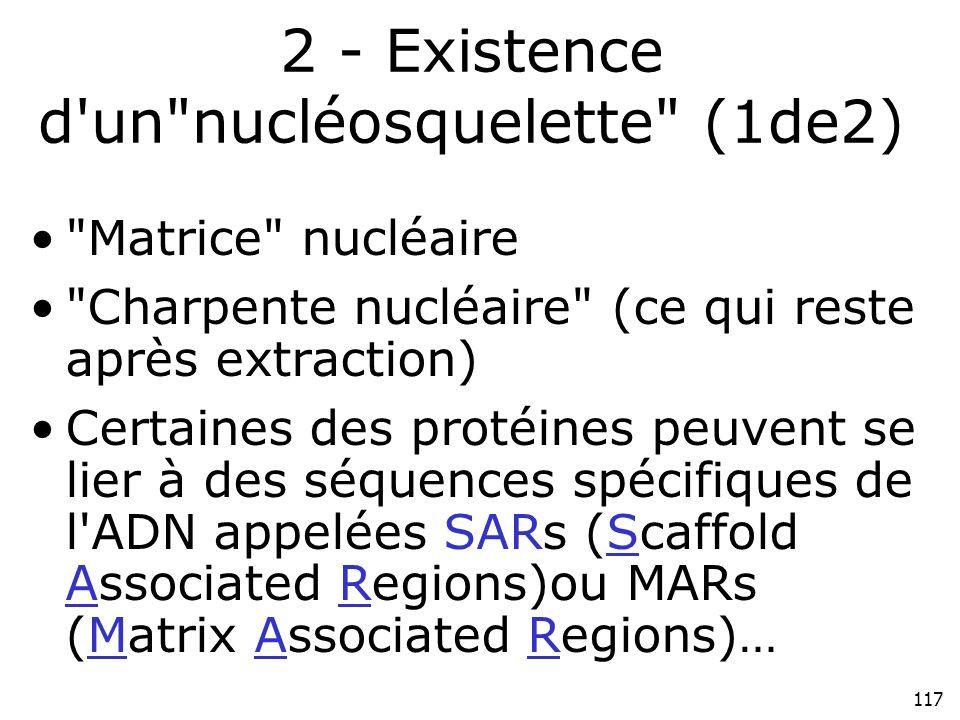 2 - Existence d un nucléosquelette (1de2)
