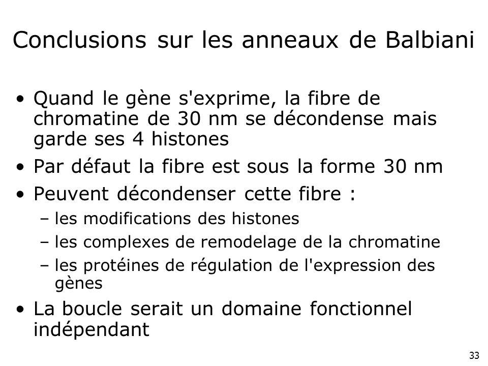 Conclusions sur les anneaux de Balbiani