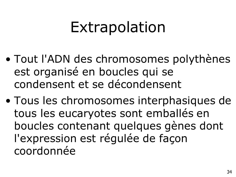Lundi 10 décembre 2007 Extrapolation. Tout l ADN des chromosomes polythènes est organisé en boucles qui se condensent et se décondensent.