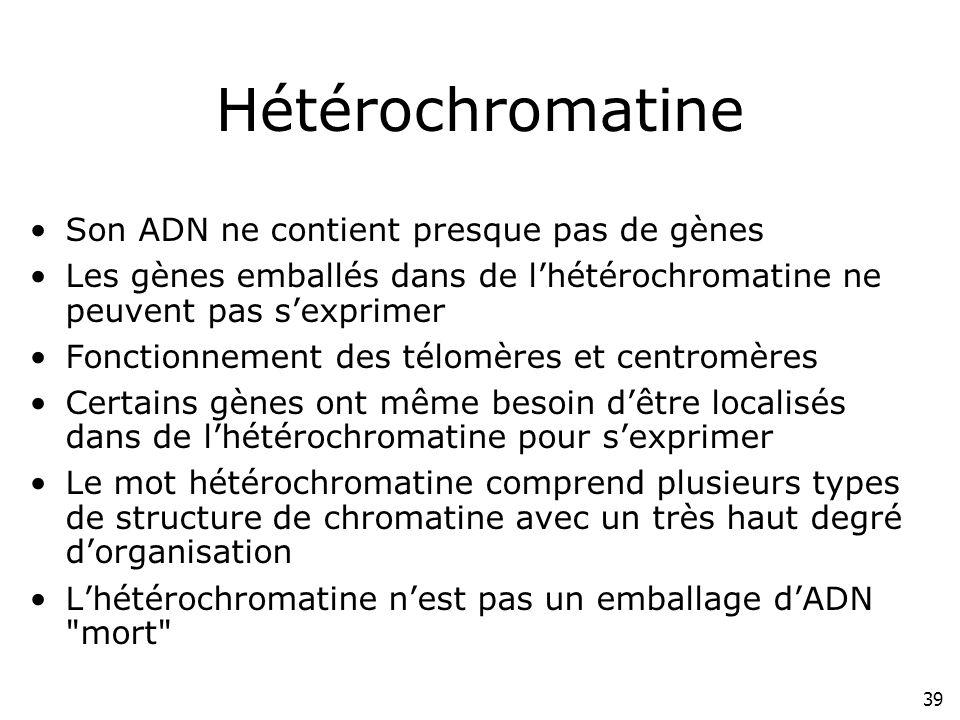 Hétérochromatine Son ADN ne contient presque pas de gènes