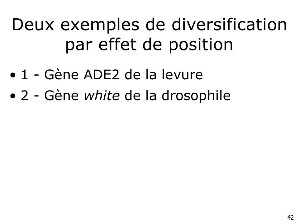 Deux exemples de diversification par effet de position