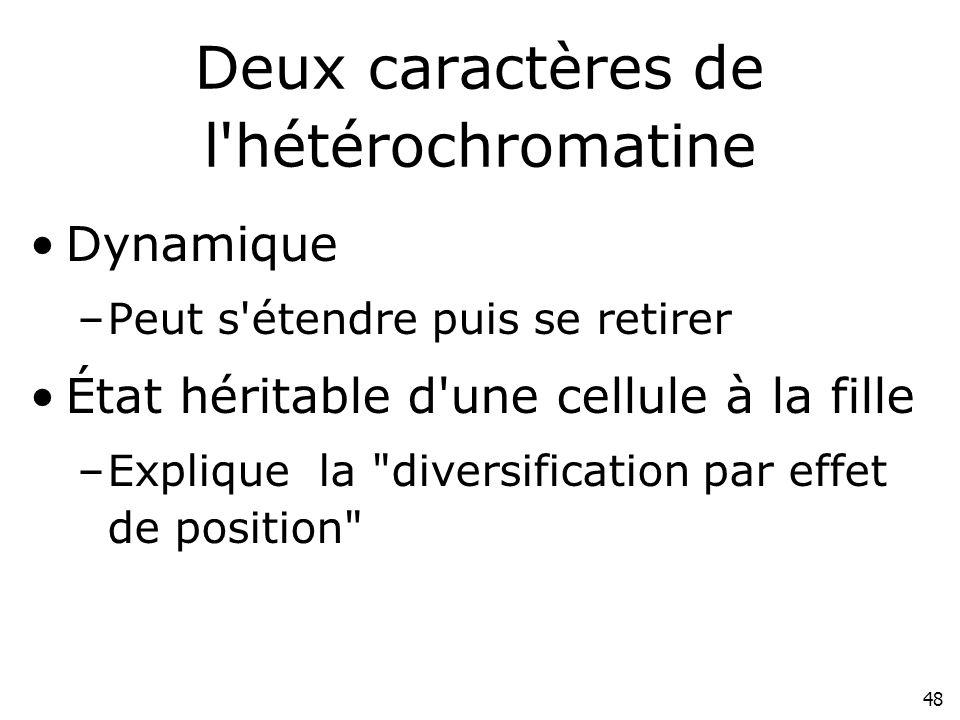 Deux caractères de l hétérochromatine